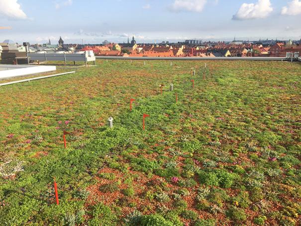 RCi-September-2020-mastic-asphalt-green-roof